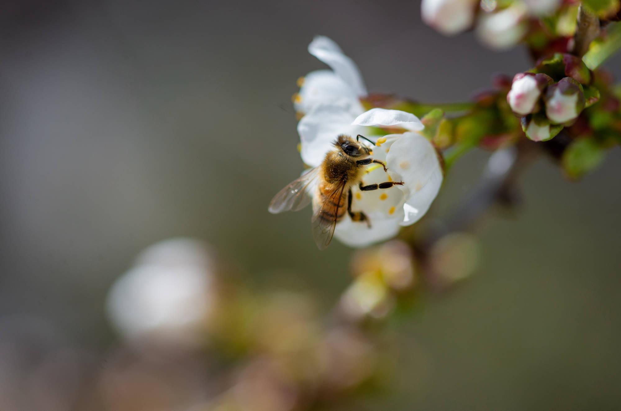 professioneller Insektenschutz