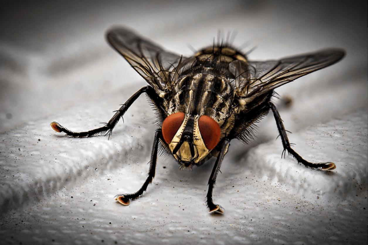 protection-anti-insectes-contre-les-mouches-moustiques-et-guêpes